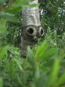 Øje for træ