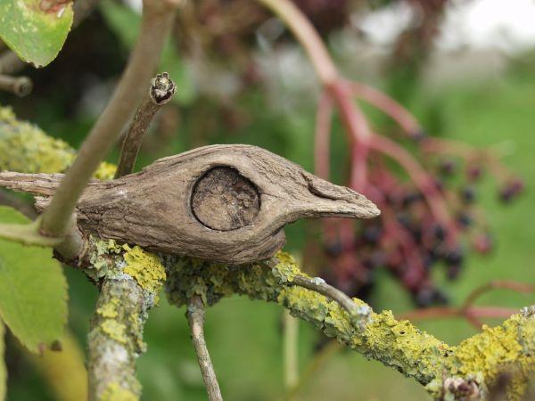 Den sure fugl i hyldetræet
