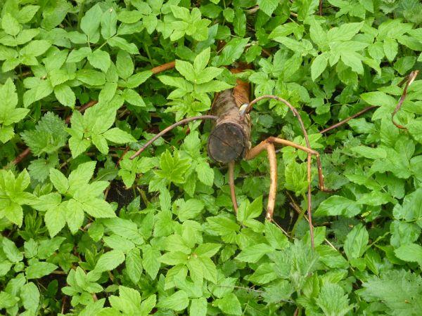 Edderkop i grøn fantasi