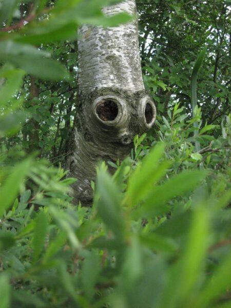 Lær at finde fantasidyr i naturen