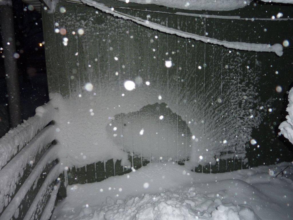 snepindsvin