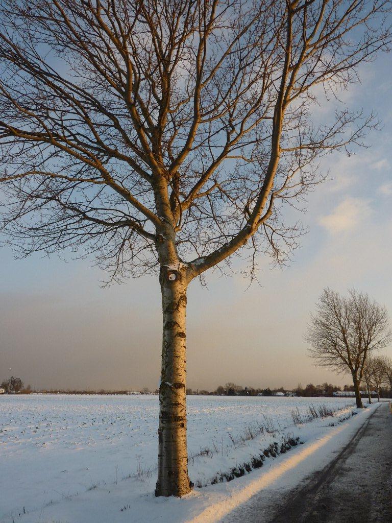 hvem bor i træet